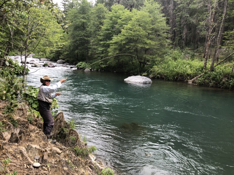 McCloud River Rainbow Trout