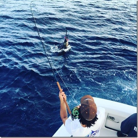 Ocean Max Fly fishing Marlin