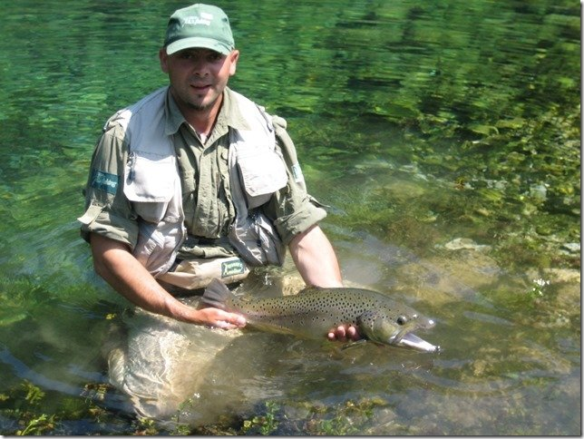 Trophy brown river Pliva