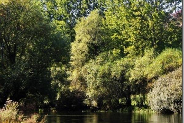 river-ribnik-spot-4AC7BD2D3-4A60-8E76-7015-0A145DDE57B7.jpg